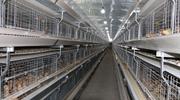 養雞設備產品是否有價格目錄57字数?