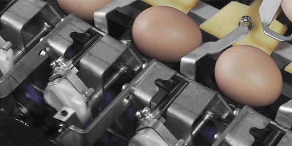 鸡笼厂来告诉您蛋鸡病后生产应如何才能恢复产能